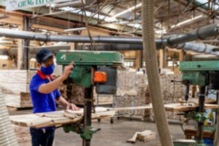 Gỗ cao su là nguồn nguyên liệu quan trọng cho ngành gỗ Việt Nam